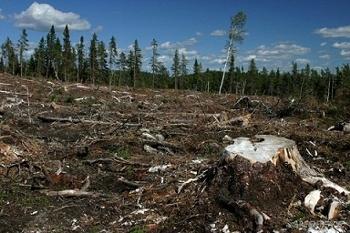 deforestacion-chile