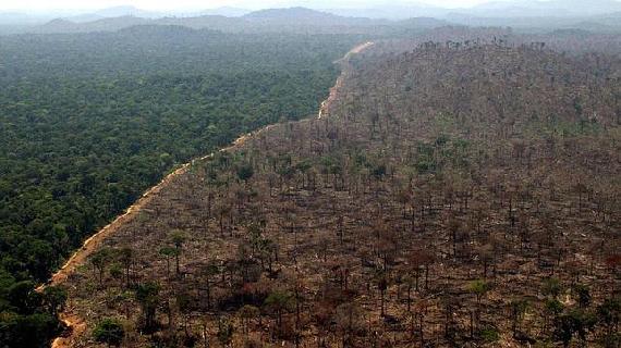 deforestacion_brasil-15